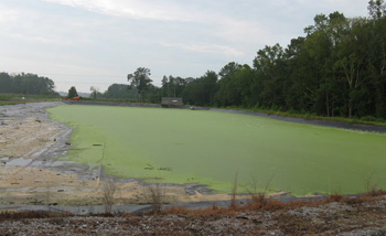 duckweed in a lagoon